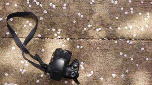 カメラと花びら